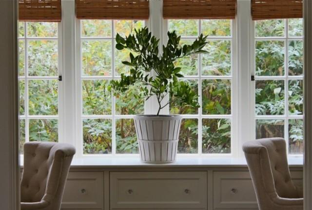 citrus tree indoors l Gardenista